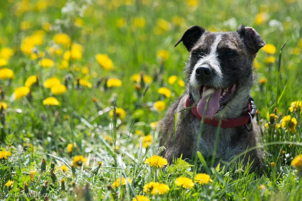 wpid4052-Hund-zu-Besuch-in-Thueringen.jpg