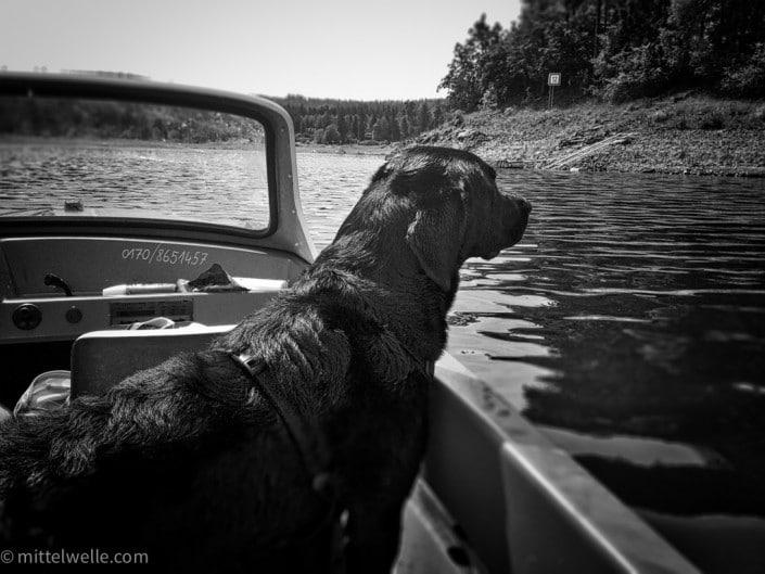 Labrador im Boot auf dem Wasser