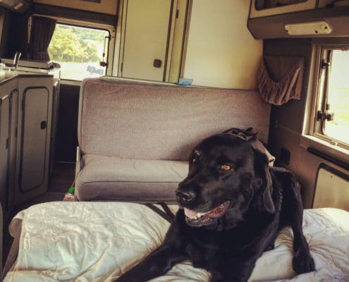 Labrador im Wohnmobil VW LT Florida